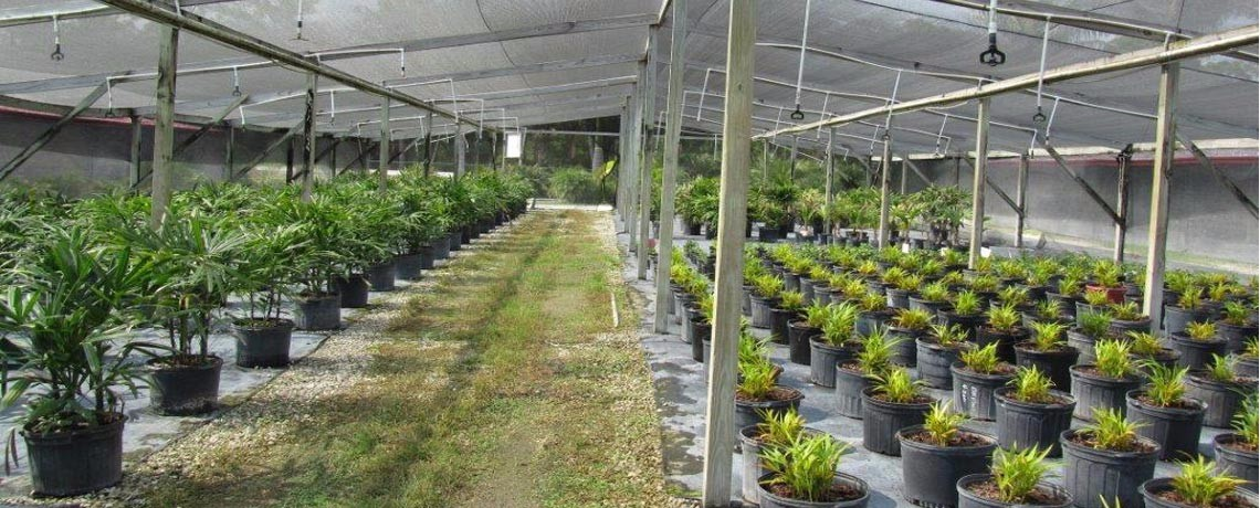 greenhouse photo|commercial property|south florida